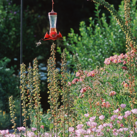Landscape with flowers and hummingbird feeder
